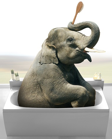 elephant in a bath